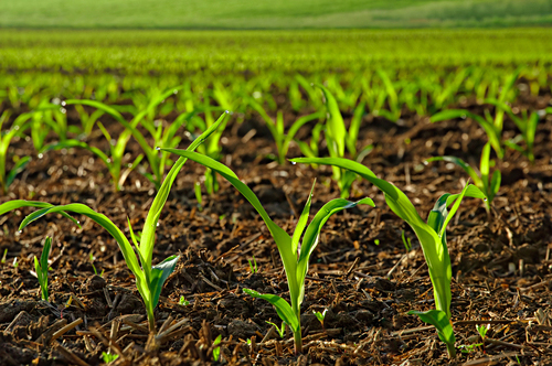 http://samvelgevorgyan.com/wp-content/uploads/2019/09/BSC-agriculture.jpg